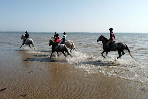 beach horse riding clare