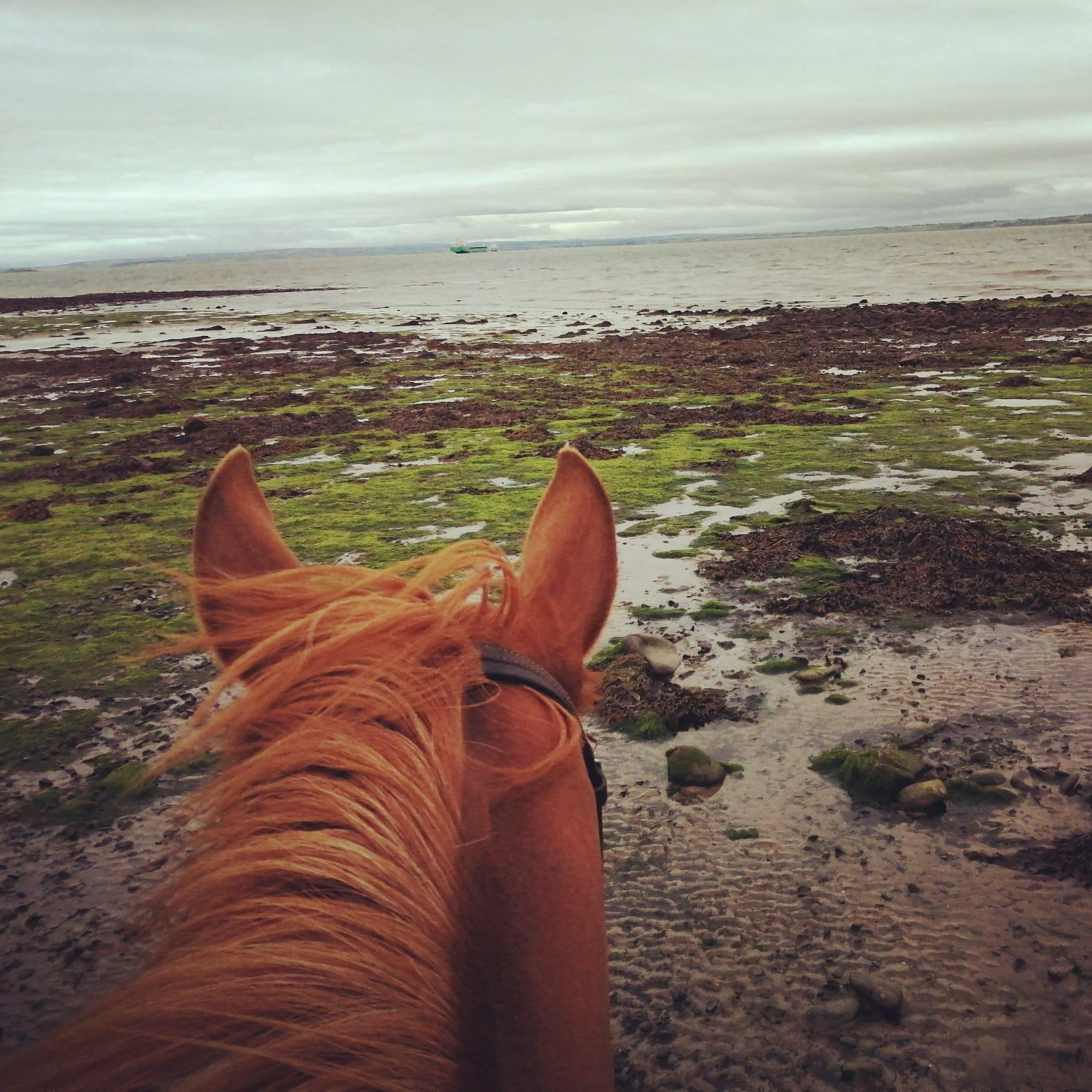 carmen horse riding