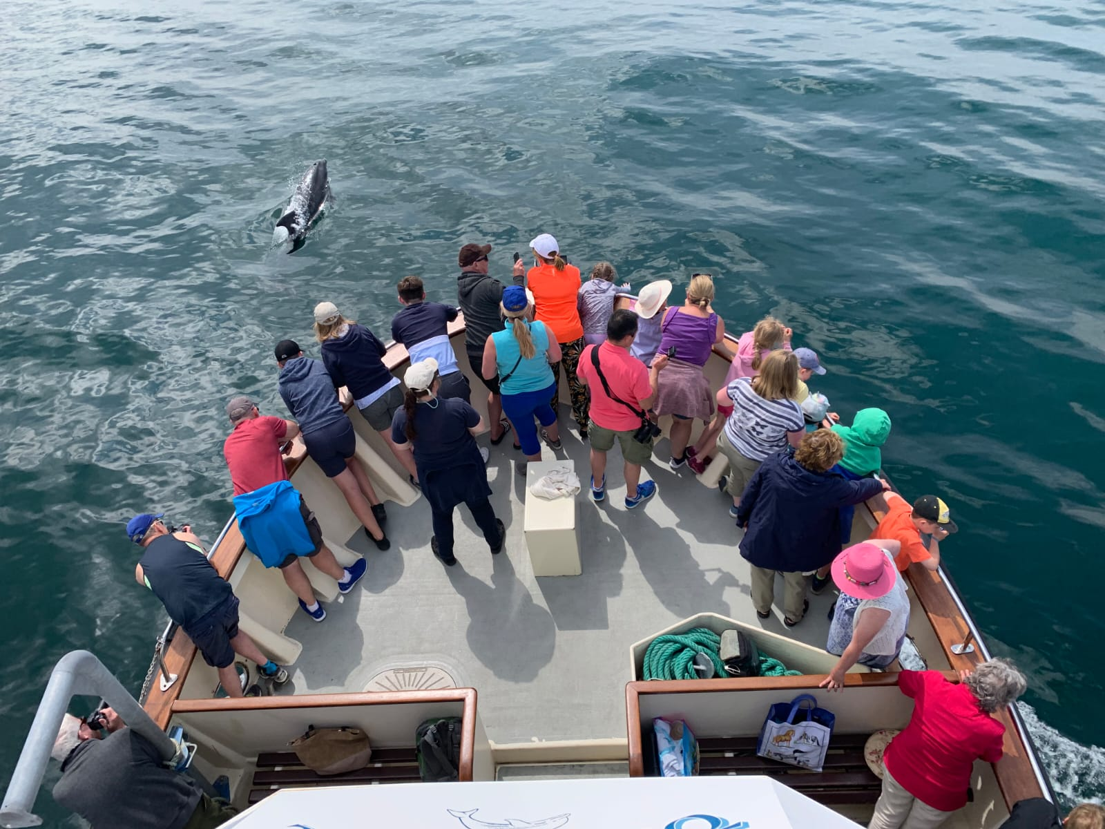 dolphin watch group